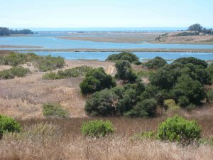 View of Elkhorn Slough