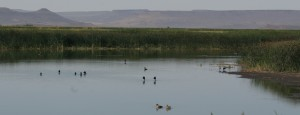 A Malheur Pond in its Unusual Geologic Setting