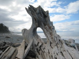 Nature's Sculpture and Dungeness Spit